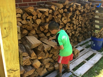 Splitting Wood (5)